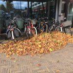 Herfst in Diemen